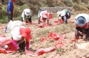 Agricultores de Arequipa en crisis