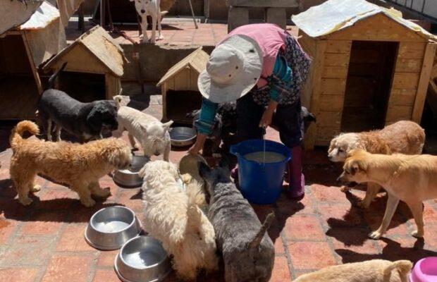Arequipa: campaña para vacunar a 6.700 canes