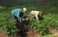 campaña agrícola 2020-2021 crecerá en 5%