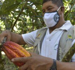 Devida invertirá para mejorar cultivos