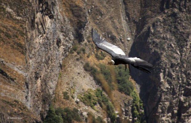 Valle del Colca: máxima distinción del turismo mundial