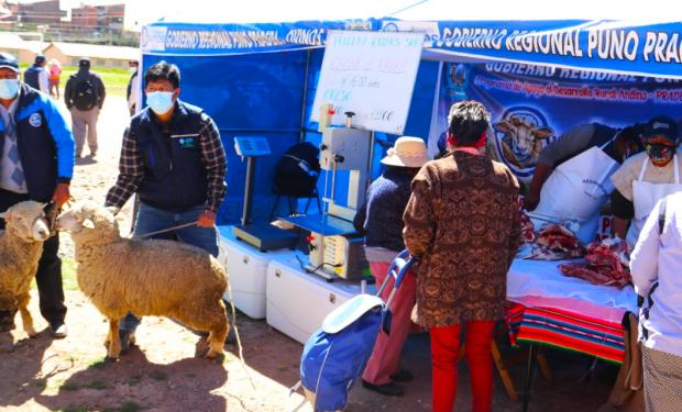 Fomentan venta de carne en Puno