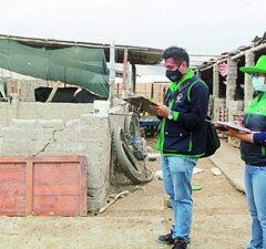 Manipulan granjas de cerdos y aves en Camaná