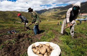 Cusco lanzará II Reforma agraria